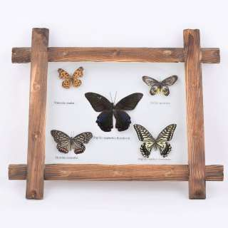 Картина бабочки под стеклом деревянная рамка 31х36 см оптом