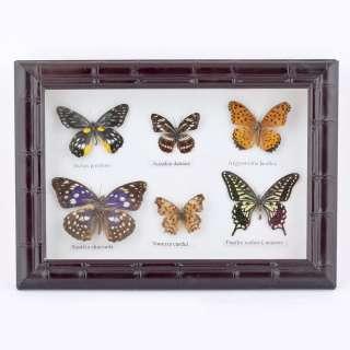 Картина бабочки под стеклом рельефная рамка 23 х 30 см оптом