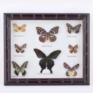 Картина бабочки под стеклом рельефная рамка 29 х 34 см оптом