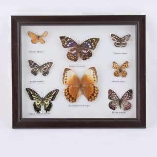 Картина бабочки под стеклом рамка коричневая 30 х 35 см оптом